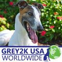 Hooray! Michael and Rita James and CAGED North West staked out the Manchester airport to block the shipment of 24 more Irish #greyhounds to China yesterday!    http://g2kww.org/220yUYk