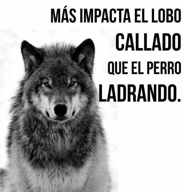 """""""More impacts the quiet Lobo than the barking dog."""""""