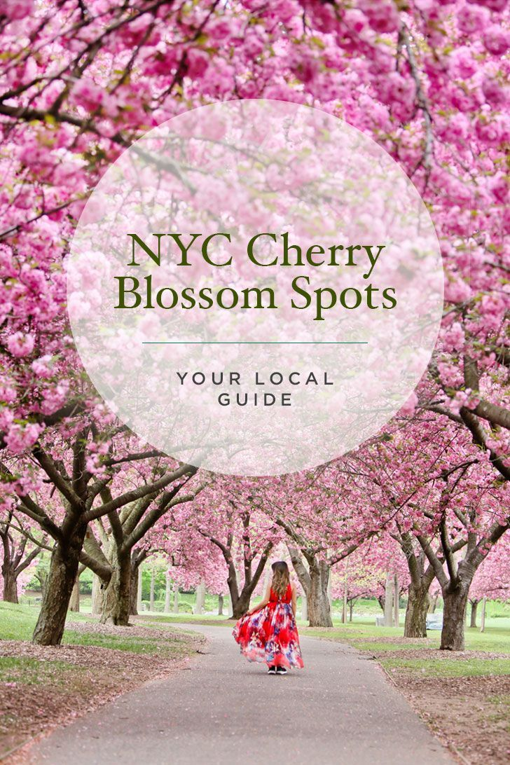 Best Places To See Cherry Blossoms In Nyc New York City Travel New York Travel Nyc