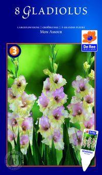 Gladiolus Mon Amour, Gladiolus Mon Amour, Gladiolus, storblomstrende. Planterne har meget lange, sværdformede blade og store farvestrålende,...