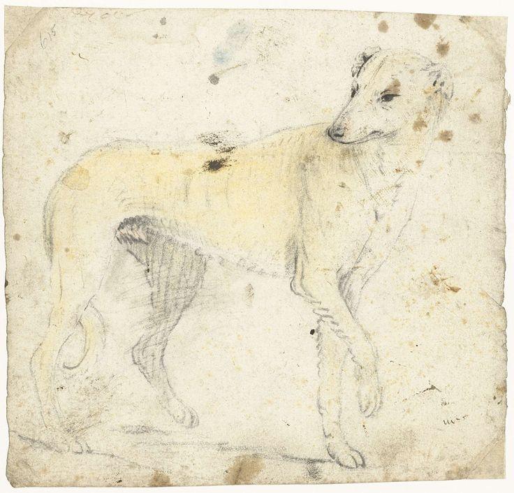anoniem   Studieblad van een lopende hond, possibly Gerard ter Borch (I), c. 1626 - before 1662  