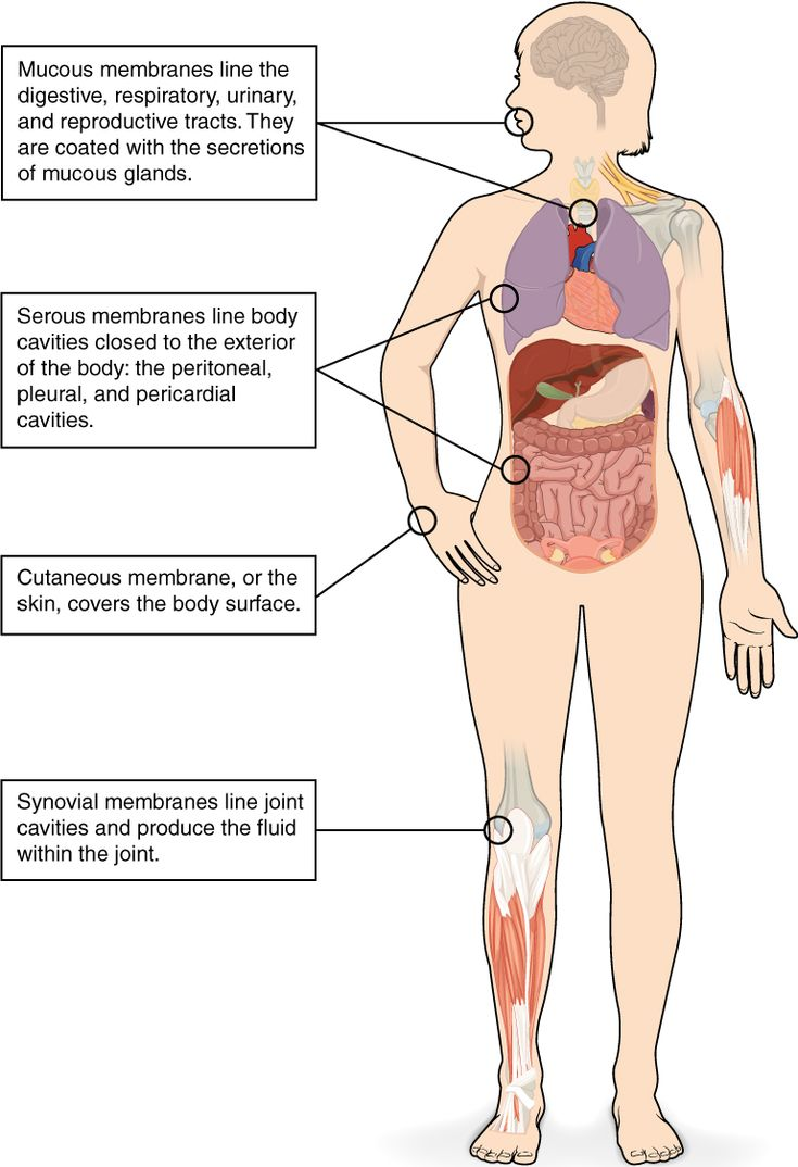 Worksheets Integumentary System Worksheet 16 best all about me images on pinterest nursing schools show pictures integumentary system this illustrations shows the silhouette of a human female from an