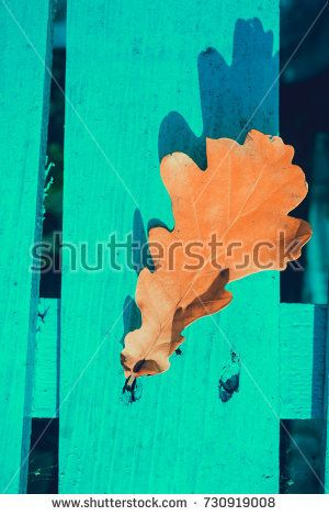 Yellow fallen oak leaves over blue wooden filtered background.
