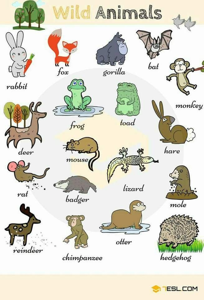 Pin By Tammy Walcott On Kids Educational Animals Name In English