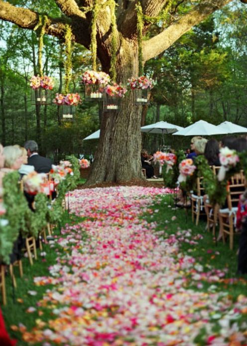 Petal covered aisle, so colourful, makes the wedding distinct from the big natural surrounding around so it doesn't get lost