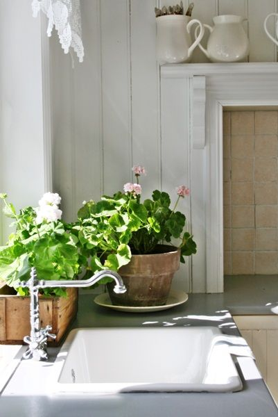 Lovely geranium pots on the counter top. Add a natural touch to your kitchen