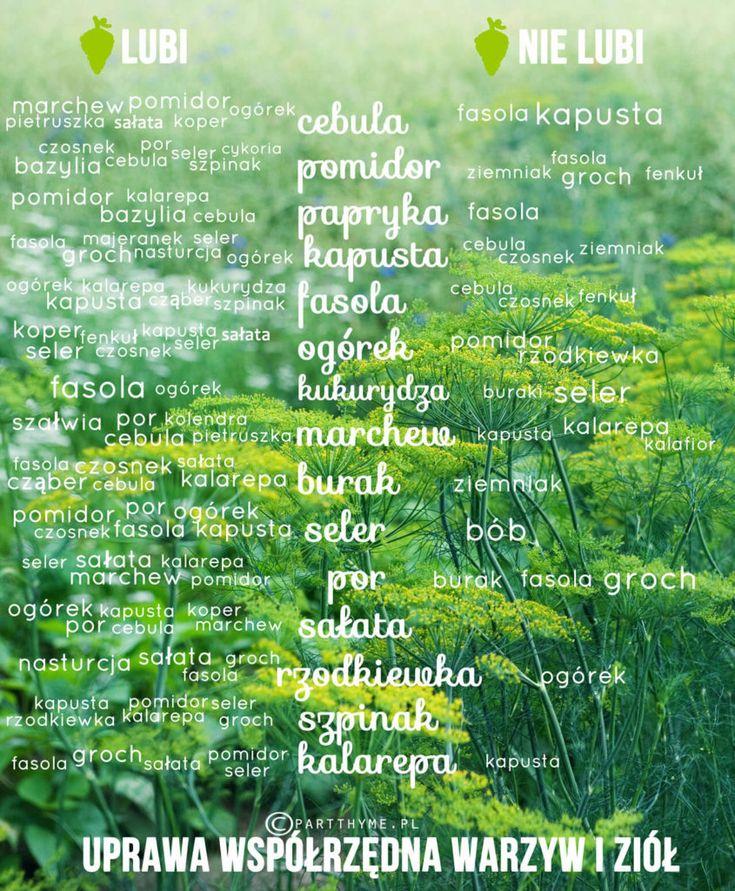 uprawa współrzędna roślin tabela