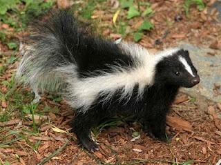 Natural De-skunking - hopefully I will NEVER need this hint!: Deskunking, Animals, Skunks, Pet, Dog, Homestead, Baking Soda, Natural De Skunking