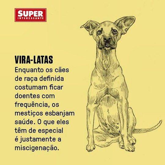Amo todos mas sou fã e defendo os vira-latas!!! Acho TODOS lindos únicos e especiais. #somostodosviralatas @amparanimal by jucamargo81