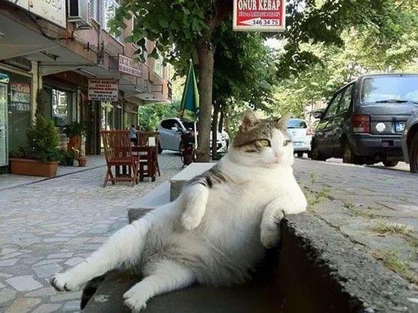 El gato más famoso de Estambul es honrado con su propia estatua | ArtFido & # 39; s B …