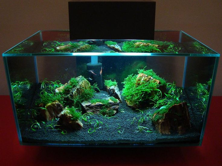 106 Best Images About Fluval Edge Inspiration On