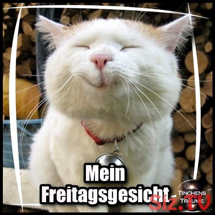 Freitag Gesicht Guten Lustigekatzenundhu Mein Morgen