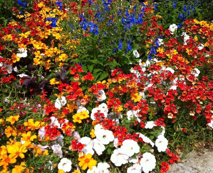 Blommor, Liseberg, flowers