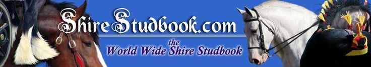 <3 American Shire Horse Association