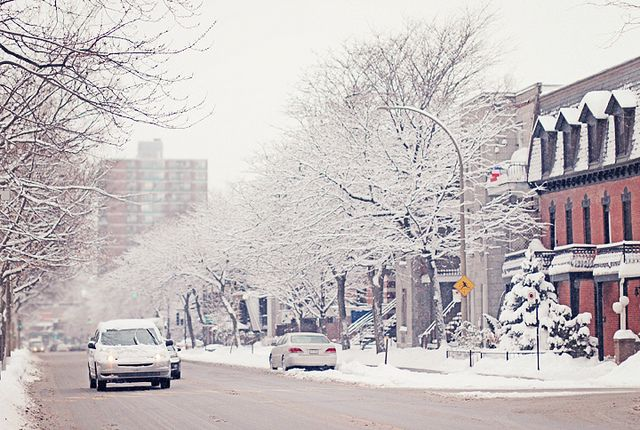 Sugar Trees - Montreal