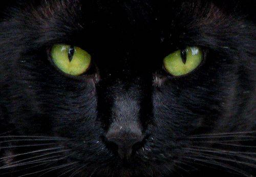 Google Image Result for http://1.bp.blogspot.com/-TU9WO6ixBG8/UC2UY7GdSZI/AAAAAAAAA7w/I31yxycbFDo/s1600/black-cat-eyes.jpg