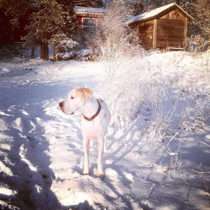 Manta the Dog and Boxing Day in Finland