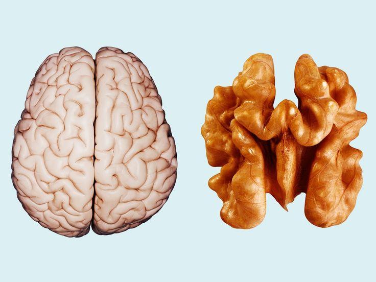 brain farmako 1