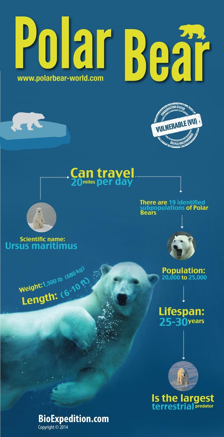 polar bears endangered essay The deplorable tantrum went viral on the internet global warming polar bears are endangered essay oct 17, 2007 polar bear population endangered polar bear essay polar bears papers, essays, and research essay on endangered polar bears.