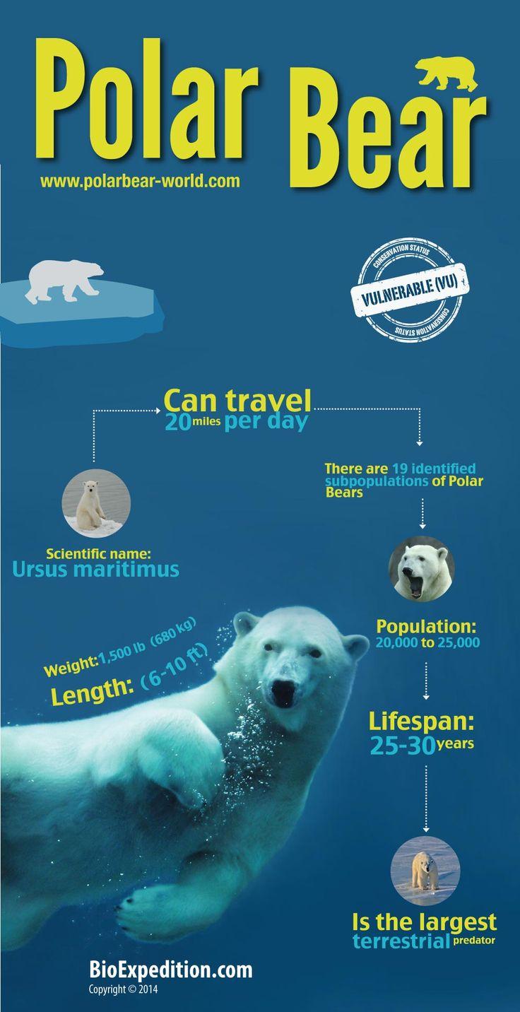 Polar Bears and Global Warming