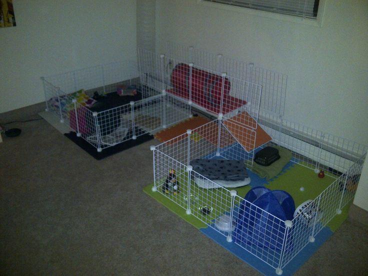 Best 25+ Hedgehogs pet care ideas on Pinterest | Hedgehog ... Hedgehogs As Pets Cages