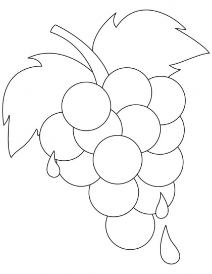 grapes coloring pages for kids - photo#34