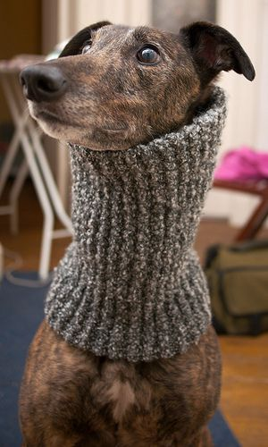 Greyhound Snood | Flickr - Photo Sharing!