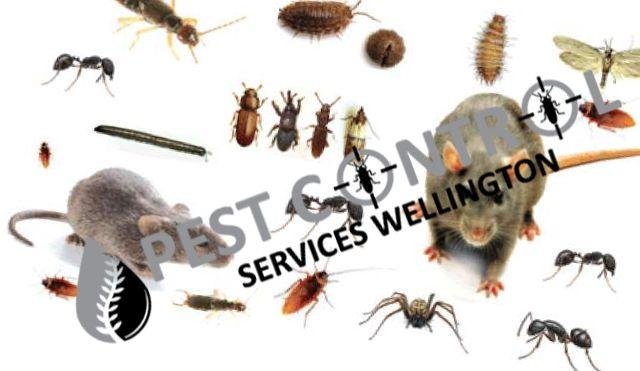 5 Benefits Of Hiring Professional Pest Control Service Provider In Porirua Pest Control Pest Control Services Pest Management