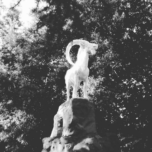 В тенистых уголках парка Ривьера можно встретить скульптуры советского периода. Ощущаешь себя в атмосфере 30-х годов... А за поворотом кипит современная ночная #жизнь. #обзорнаяэкскурсия #закат #небо #солнце #свет #светильник #фонарь #оранжевый #фиолетовый #солнце #море #сочи2017 #сочи #вечер #закат #добрыйвечер #добрыймиллионер #инстаграммнедели #светильникилофт #светила #козел {{AutoHashTags}}