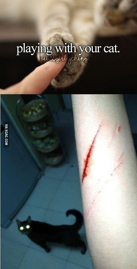 Playing with your cat: expectation vs reality