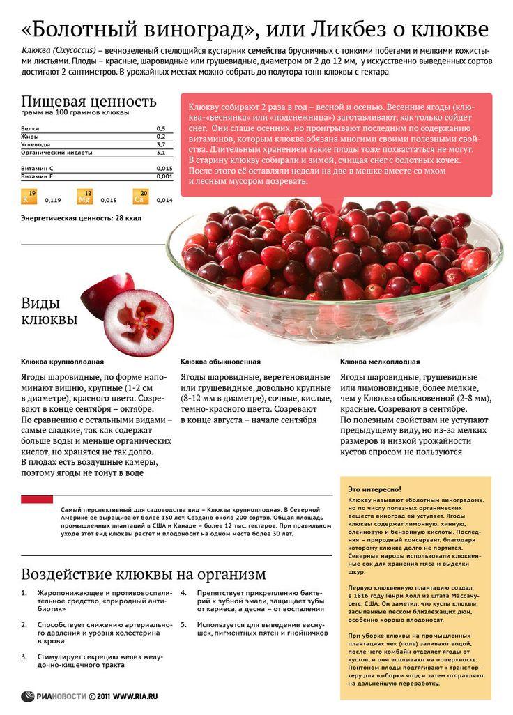 Болотный виноград, или Ликбез о клюкве
