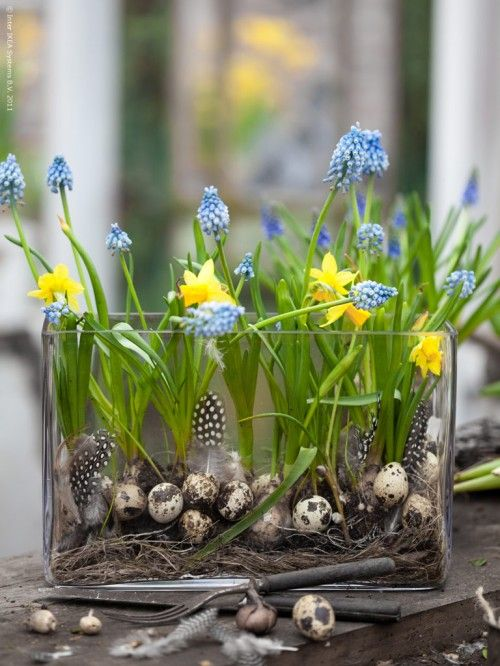 easter arrangement with quial eggs, feathers and hyacinths and daffodils