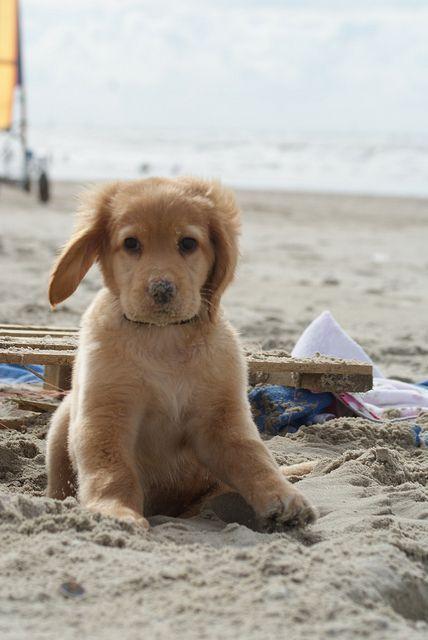 Puppy at Knokke hihihi xxx zo warm is het hier niet en pup doet alleen die zotte zoeten als bunny erbij is ❤️❤️❤️