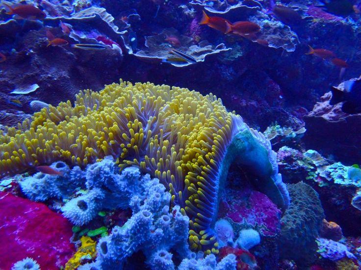 The amazing underwater world in the #Komodo Nationalpark. #Dive #Anemony