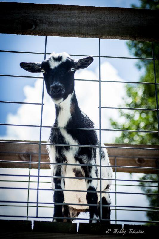 My Farm Zoo