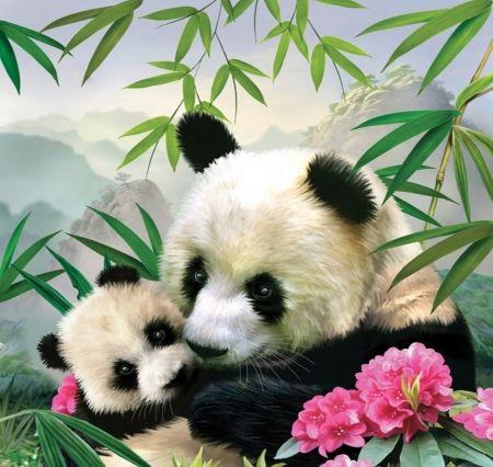Best 25 panda bears ideas on pinterest cute bears cute - Panda anime wallpaper ...