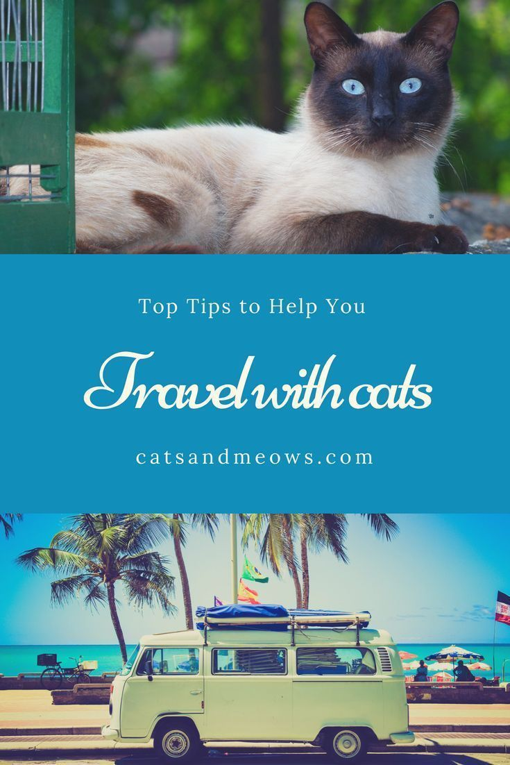 images How to Change Your Cats Routine