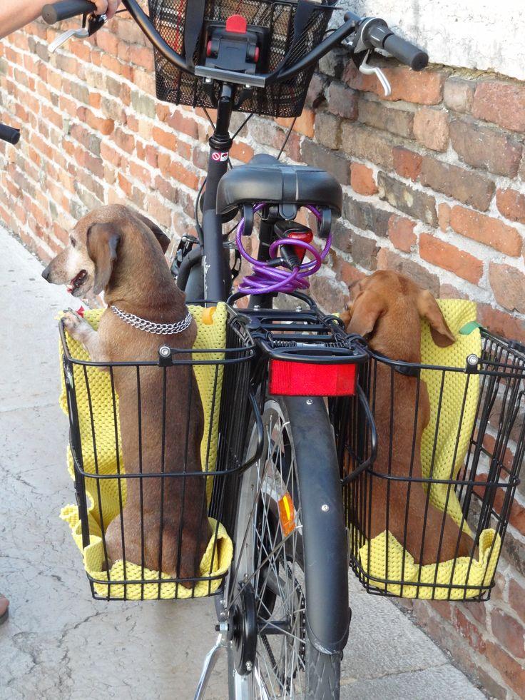 dogs onboard