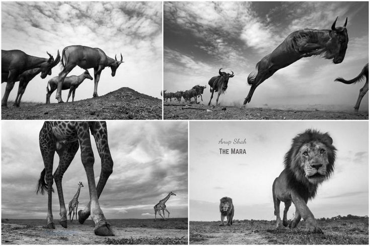Anup Shah - 'The Mara'