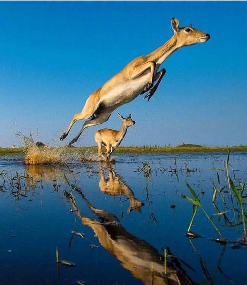 The Okavango Delta in Africa
