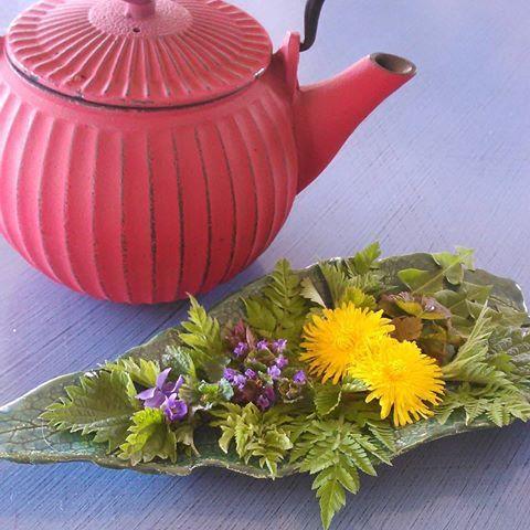 Sesongens urte-te fra hagen på Stabekk med blader av #brennesle #spanskkjørvel #løvetannn #markjordbær #villbringebær #solbær og #spiseligeblomster av #marsfiol #korsknapp og #løvetann  Til teen så legger jeg blader og blomster i koppen (eller kannen), heller varmt vann over og lar det trekke en stund. Er du nybegynner med å lage egne grønne teer så kan det være lurt å bruke litt honning og sitron i koppen for å få frem de andre smakene.  Alle disse vekstene er fine til å tørke til senere…
