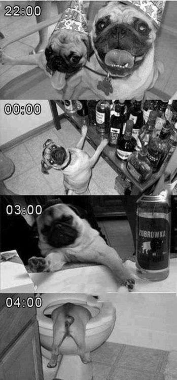 Party Pugs Humor Train