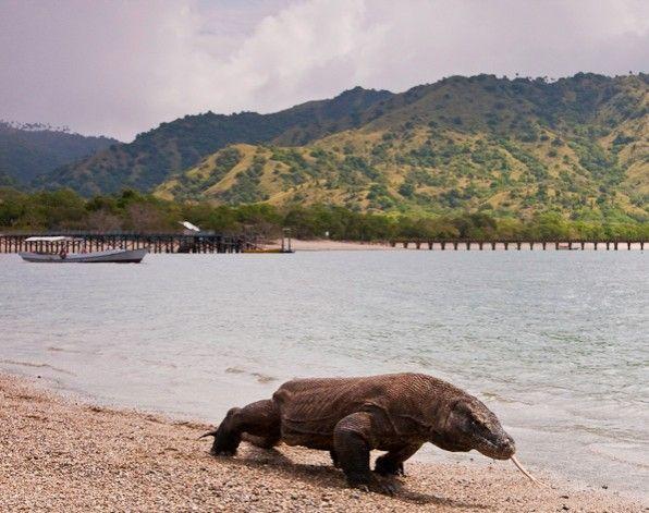 Parque Nacional de Komodo, Indonesia. Asia. Patrimonio de la Humanidad