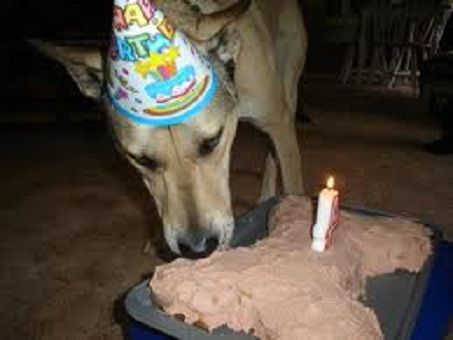 Happy Arf Arf Dog Birthday Cake Recipe: