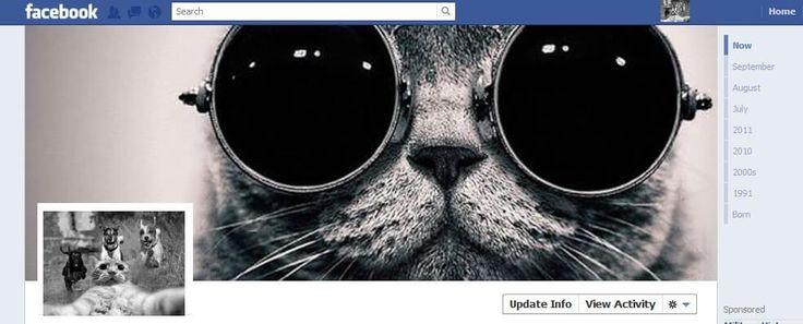 perfil facebook gato