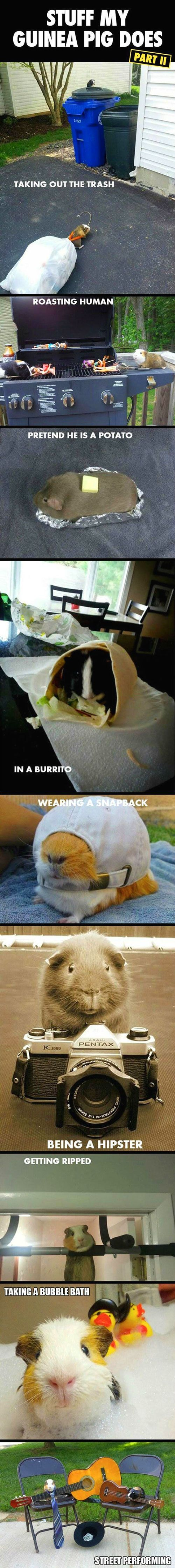 Stuff my guinea pig does…