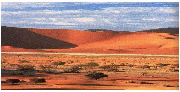 Bioma Deserto