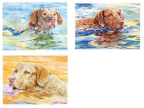 """Water Dog"" Chesapeake Bay Retriever Fridge Magnet Set"