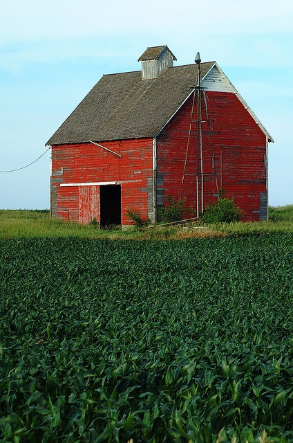 This is HOME!!! Corn Fields, Corn Cribs, and Barns!  Me too---born and raised in Iowa..always will be home :)