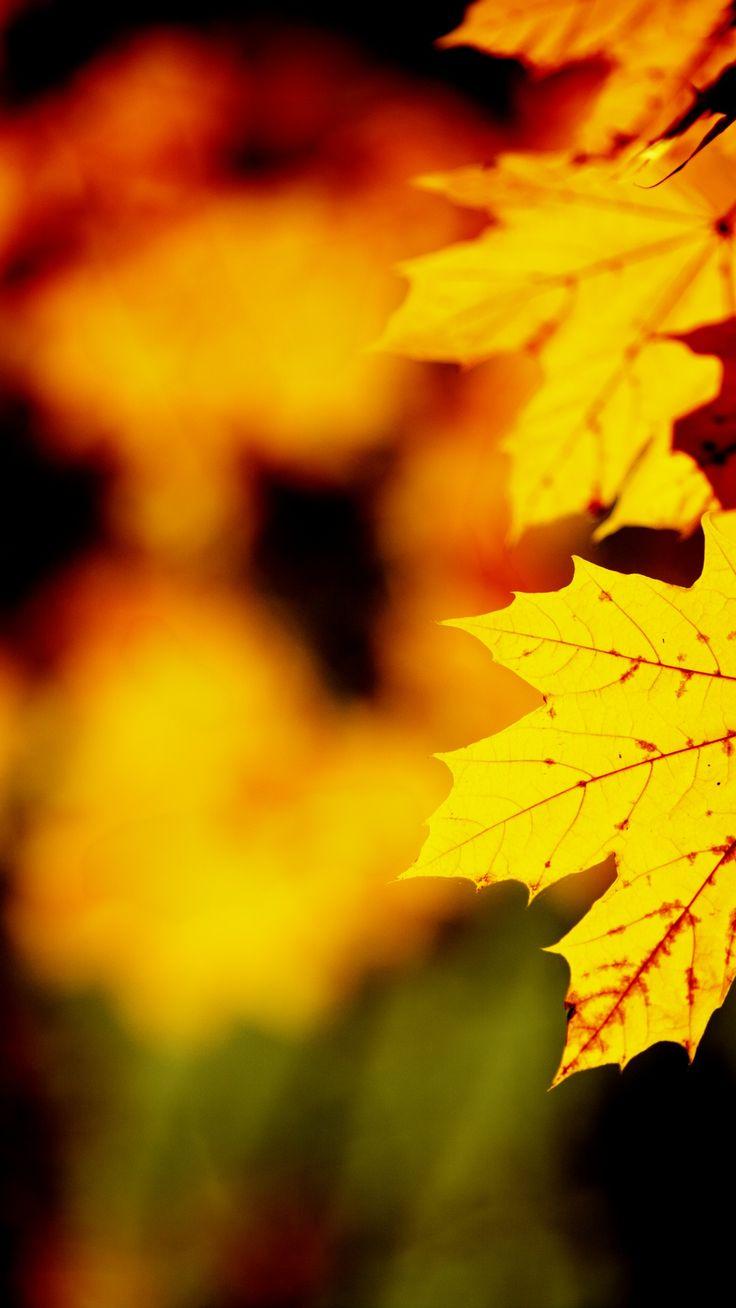 1080x1920 Orange leaf Htc one wallpaper | iPhone7, スマホ壁紙/待受画像ギャラリー 1080x1920 Orange leaf Htc one wallpaper | iPhone7, スマホ壁紙/待受画像ギャラリー